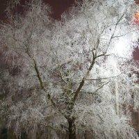 Зимний вид из окна :: Ольга Васильева