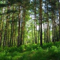 В весеннем лесу :: nika555nika Ирина