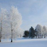 Солнечный морозный день :: Андрей Куприянов