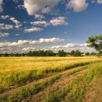 В поле за околицей :: Валентин Котляров
