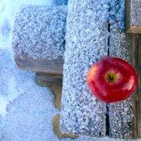 Молодильное яблочко :: Мария Корнилова