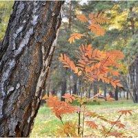 Осень в парке :: Дмитрий Конев