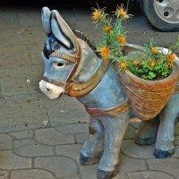 грустный ослик :: Александр Корчемный