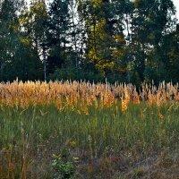 Травы ..травы.... :: Валера39 Василевский.