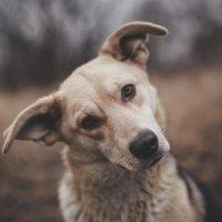 Dog :: Valery Mikhnevich Михневич