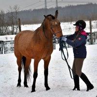 я люблю сою лошадку... :: Moscow.Salnikov Сальников Сергей Георгиевич
