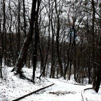 Зимний вечер в Ботаническом саду Фото №2 :: Владимир Бровко