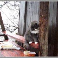 Оставили на хозяйстве ( летнее кафе в парке ). :: Ирина Прохорченко