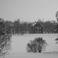 Зима в черно-белых тонах.... :: Tatiana Markova