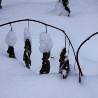 снег :: Лилия Рахматуллина