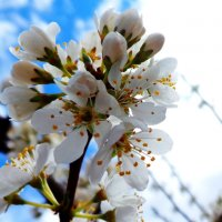 Весна :: Лилия Рахматуллина