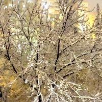 Снег в Сочи. :: СветЛана D