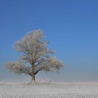мороз :: evgeny ryazanov