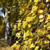 Золотая листва :: Дмитрий Конев