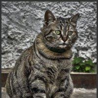 Во всей красе-из серии Кошки очарование мое! :: Shmual Hava Retro