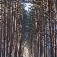 красивый вид на лес :: İsmail Arda arda