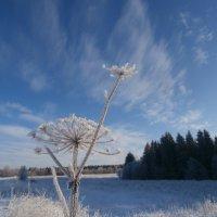 Зимний этюд. :: Антонина Гугаева