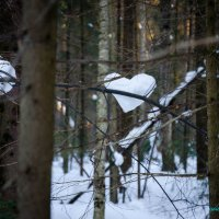 и у леса есть сердце.... :: Оксана Грищенко