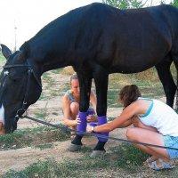 Эх, жизнь лошадиная :: Natali