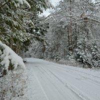 Лес после снегопада :: Милешкин Владимир Алексеевич