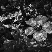 Bali.flower. :: Александр