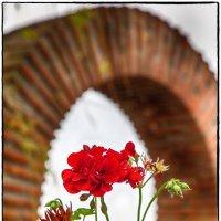 Болгария Несебр :: Leo Alex Photographer