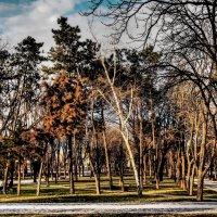 Февральские парки Краснодара. :: Андрей Печерский