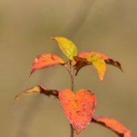 листя :: vova8730