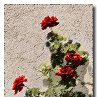 Розы :: GaL-Lina .