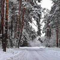 И пахнет снег сосновою корой... :: Лесо-Вед (Баранов)