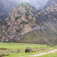 Рабочая лошадка гор :: Артём Федин
