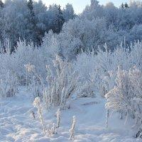 Морозный день. :: Larisa Simonenkova