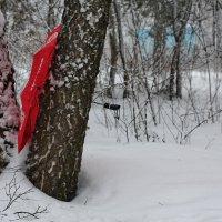 Занесенный ветром .... :: Надежда Баликова