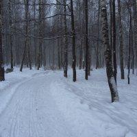 IMG_1761 - В Москве - снег :: Андрей Лукьянов