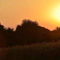 Летний тёплый вечер... :: Вика К.