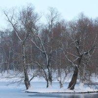 Февраль в гатчинском парке... :: Tatiana Markova