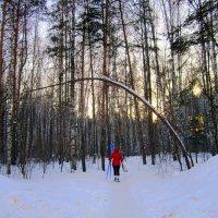 На лыжню ! :: Мила Бовкун