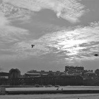 птицы с облаками :: Елена
