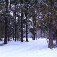 Зимние прогулки :: Татьяна Ломтева