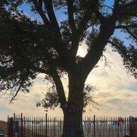Одинокое Дерево :: Николай