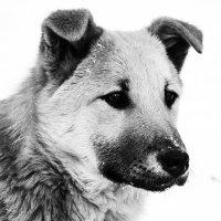 Портрет собаки :: Вероника Подрезова