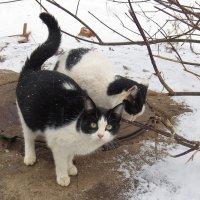 Встречные коты :: Ната Волга