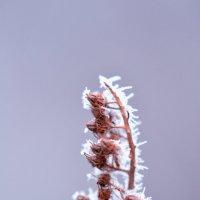 первые морозы :: Olga Veisman