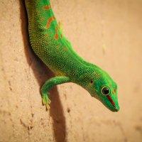Зелёная :: ViP_ Photographer