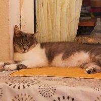 Ленивый турецкий кот. :: Диана Муратшина