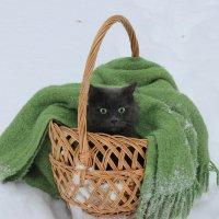 Изумленный кот :: Ната Волга