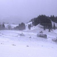 Зима. Метель. Снег. Холодно. Ветрено. Погода, созданная для горячего чая и теплого пледа) :: Svetlana Kravchenko