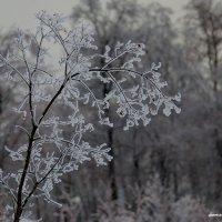 Ледяное царство :: Михаил Тищенко
