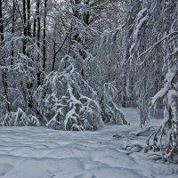 *** Полюбил бы я зиму, Да обуза тяжка...(Васкеловские сказки) :: Сергей В. Комаров