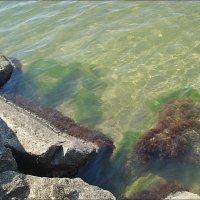 Плескалось Азовское море... :: Нина Корешкова